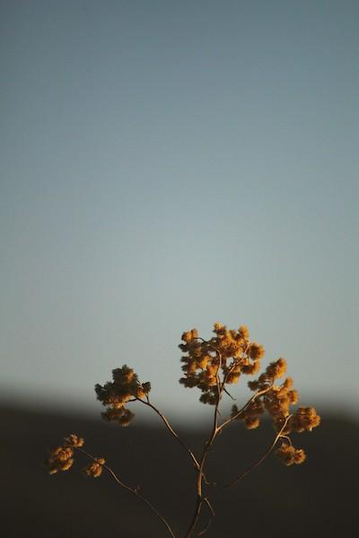Natureza Minimalista - Campos do Jordão, 2019 por Henrique Corregedor