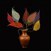 Folhas com haste - Multicoloridas