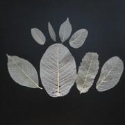 Kit folhas mini e P - cru (120 unidades)