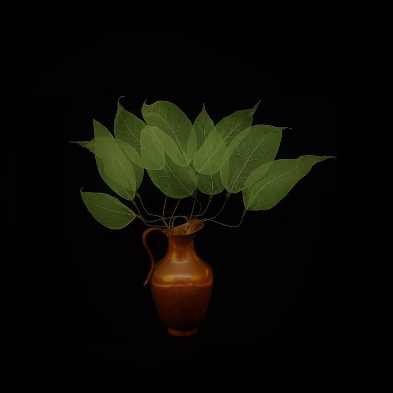 Folhas com haste - Verde