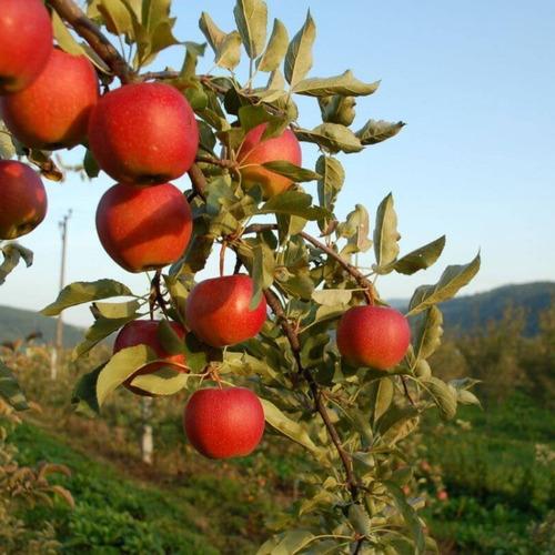 Mel Macieira Adoçante Natural Aumenta Imunidade C/sif 500g