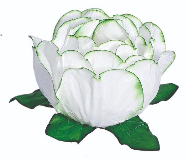 Forminha Bela Branco Borda Verde