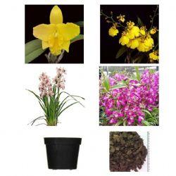 Kit Especial – 4 variedades de Mudas de Orquídeas + Acessórios