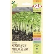 Semente de Microverde Manjericão
