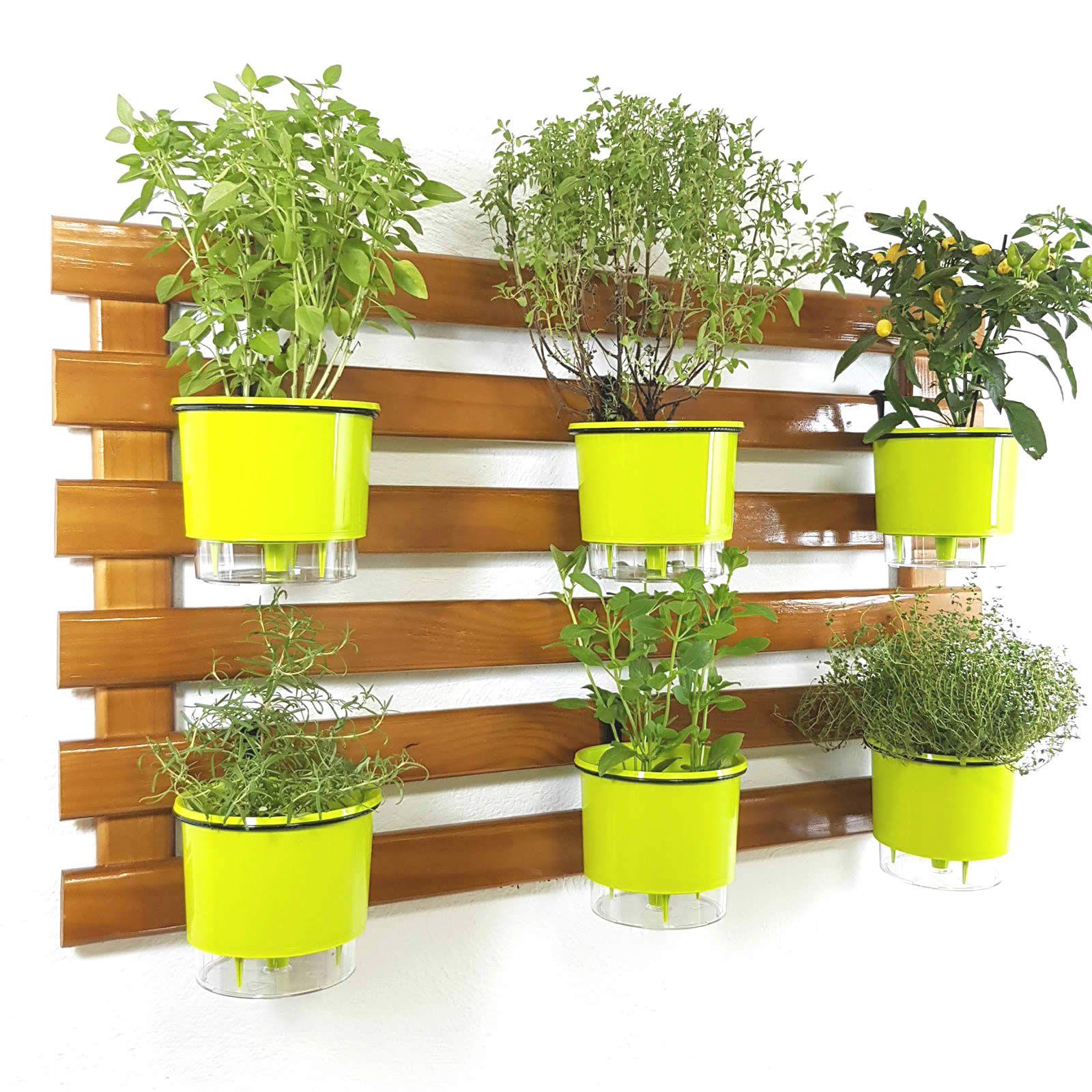 Horta Vertical Imbuia 60x100cm com 6 suportes e 6 Vasos Auto Irrigáveis Verde Claro