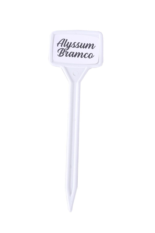 Identificador de Plantas - Alyssum Branco