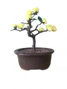Bonsai Artificial Flor Amarela