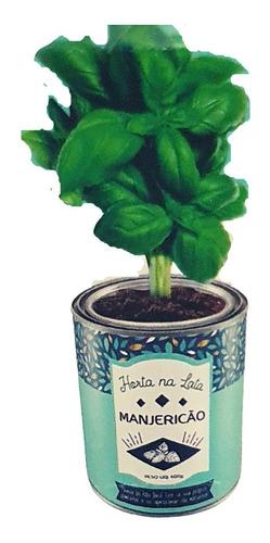 Horta na lata - 01 unidade - (Lata + Sementes + Terra)