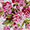 Estampa Floral Rosa Chic