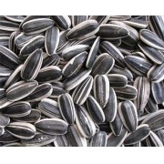 Girassol sementes Alimento para Pássaros , papagaios e etc 500 g