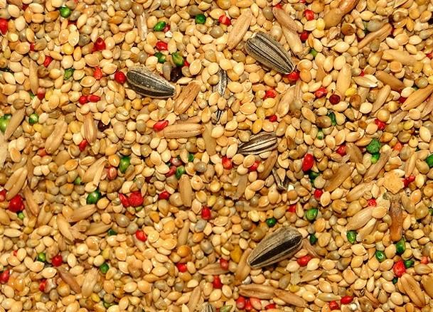 Mistura Alimento para Periquitos 500 g