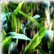 Meryl Digital Estampado (61362-1)