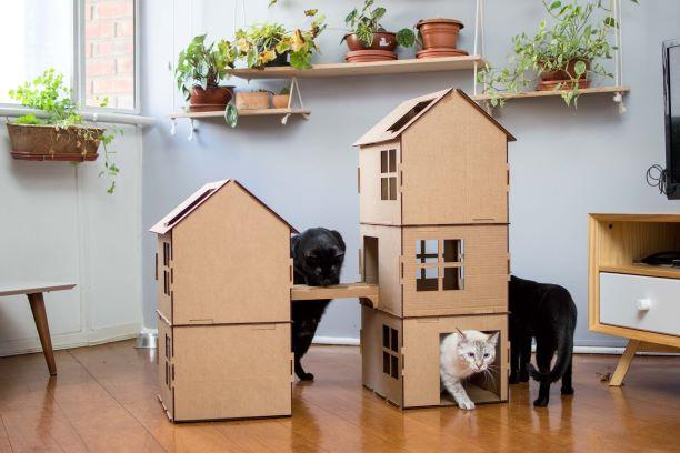 Complexo com ponte de papelão para gatos