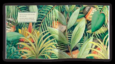 Descobrindo o Xingu - Marco Hailer  - Loja da Verdê