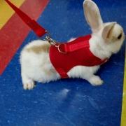 Coleira Peitoral para Coelhos e Hamster