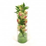Arranjo Cymbidium