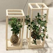 Kokedama Suculentas, Plantas e ou Orquídeas