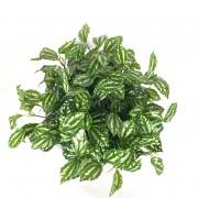 Arranjo Verde Philodendro