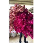 Bouganville Pink Permanente - haste