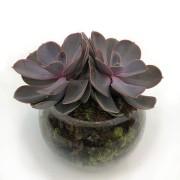 Bowl Suculenta
