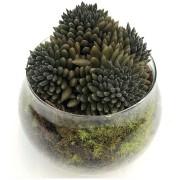 Bowl Suculentas
