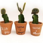 Cactus em vaso