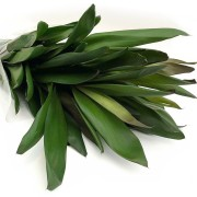 Maço dracena Verde