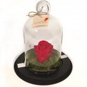 Rosa Preservada na Cúpula