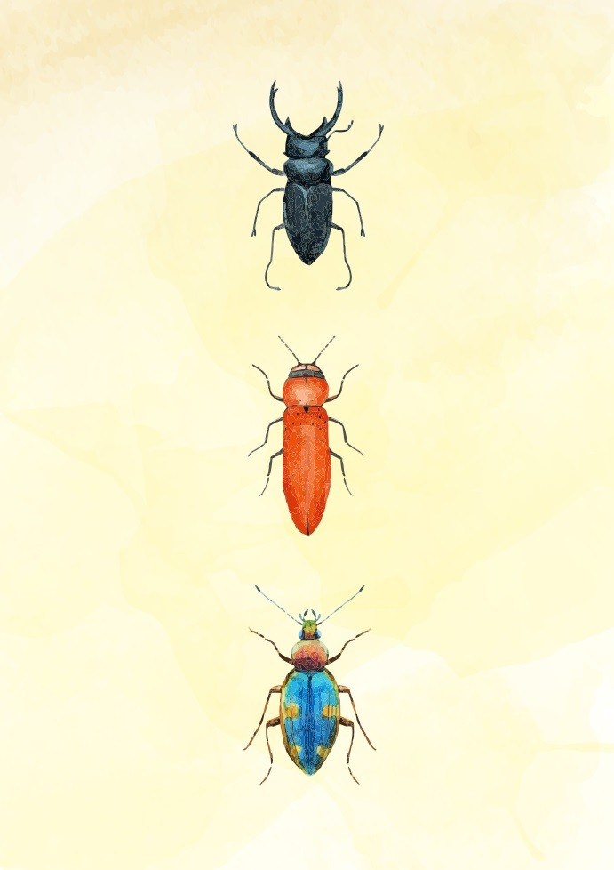 Pôster Beetles IV
