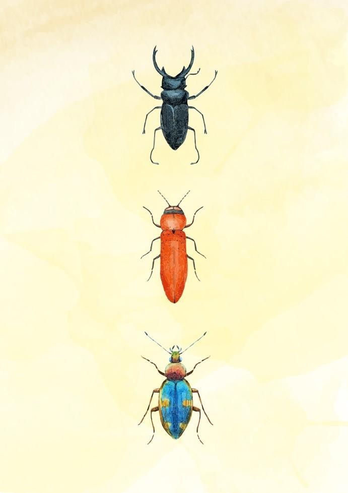 Pôster Beetles IV