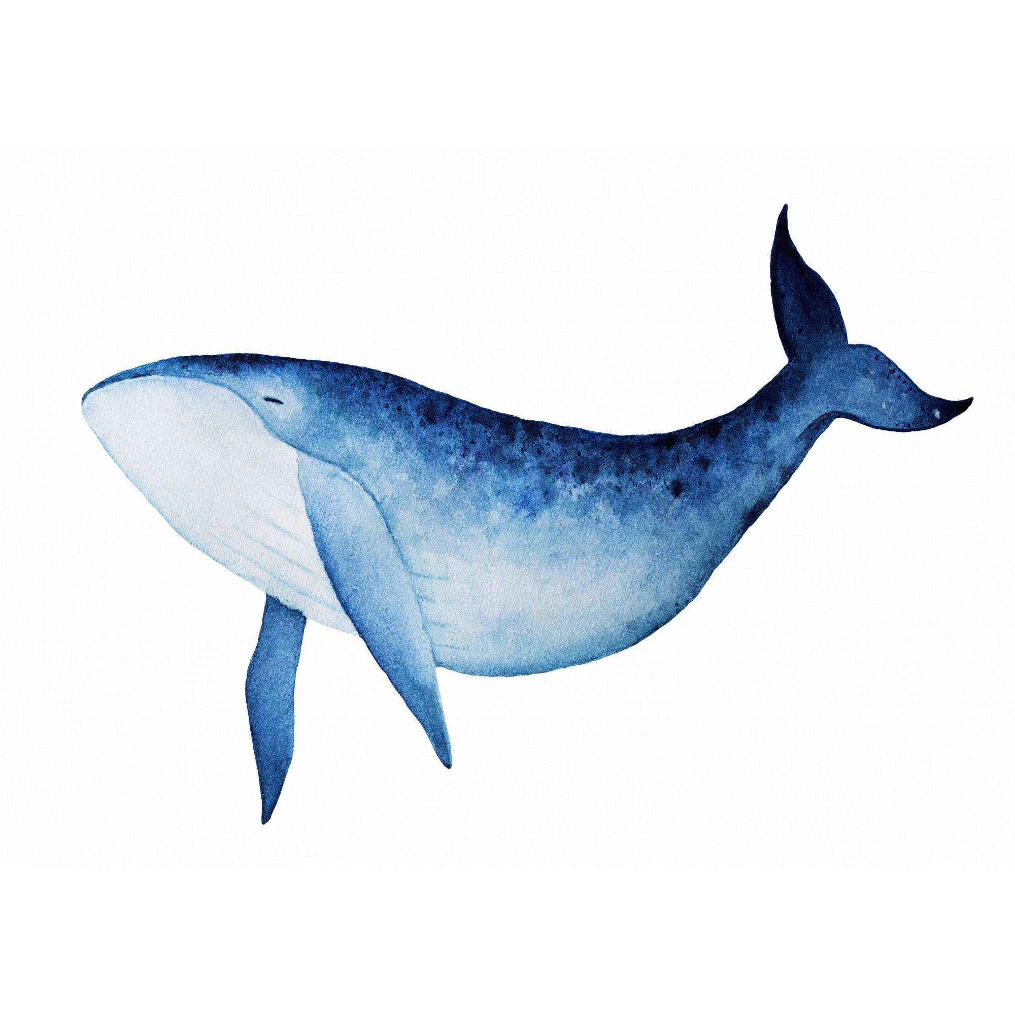 Pôster Blue Whale I