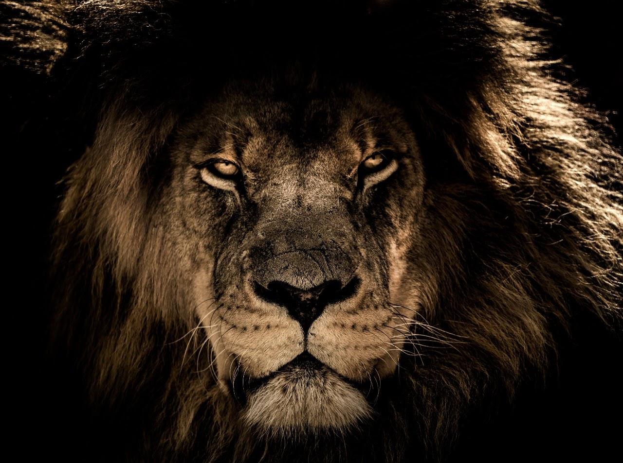 Leão - Impressão em Cristal 4mm