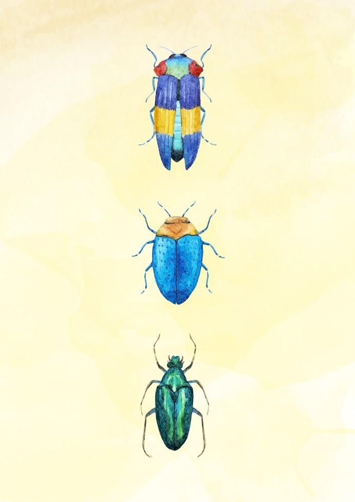 Pôster Beetles III