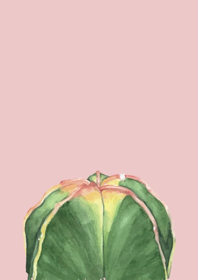 Pôster Flor do Deserto IV