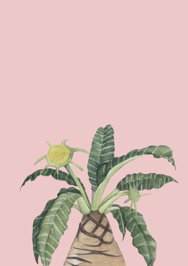 Pôster Flor do Deserto VIII