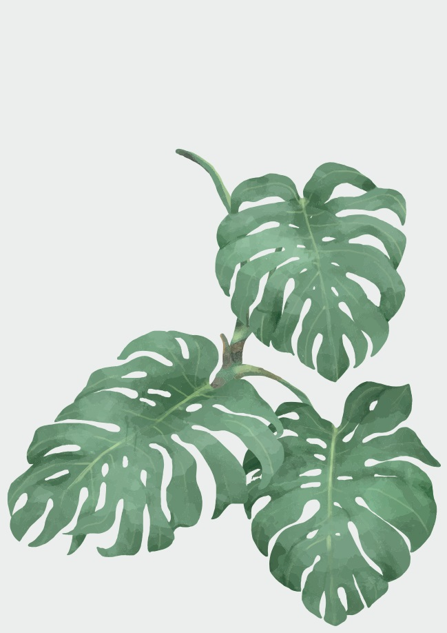 Pôster Philodendron