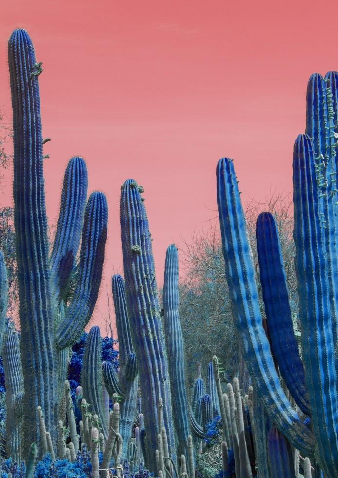 Pôster Pink Cactus