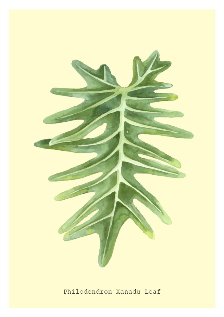 Xanadu Leaf