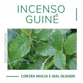 Incenso Guiné