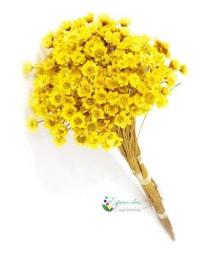 Sempre Viva Amarela