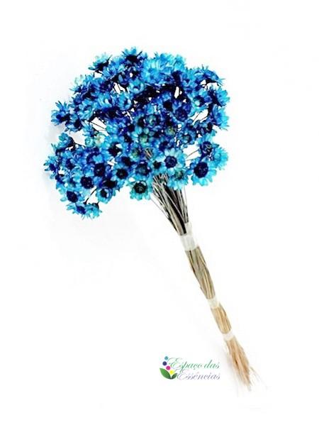 Sempre Viva Azul