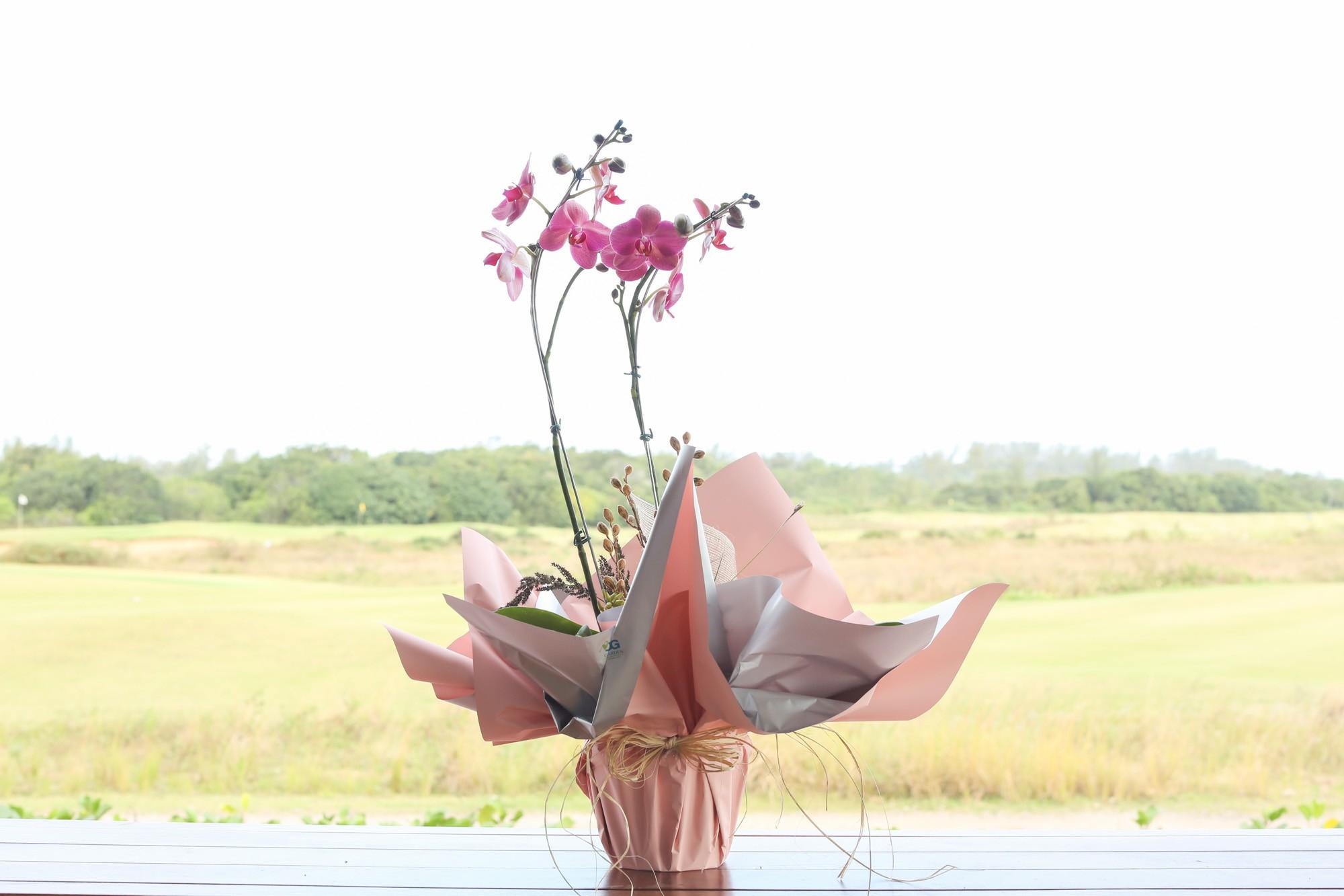 Orquídea Goiaba