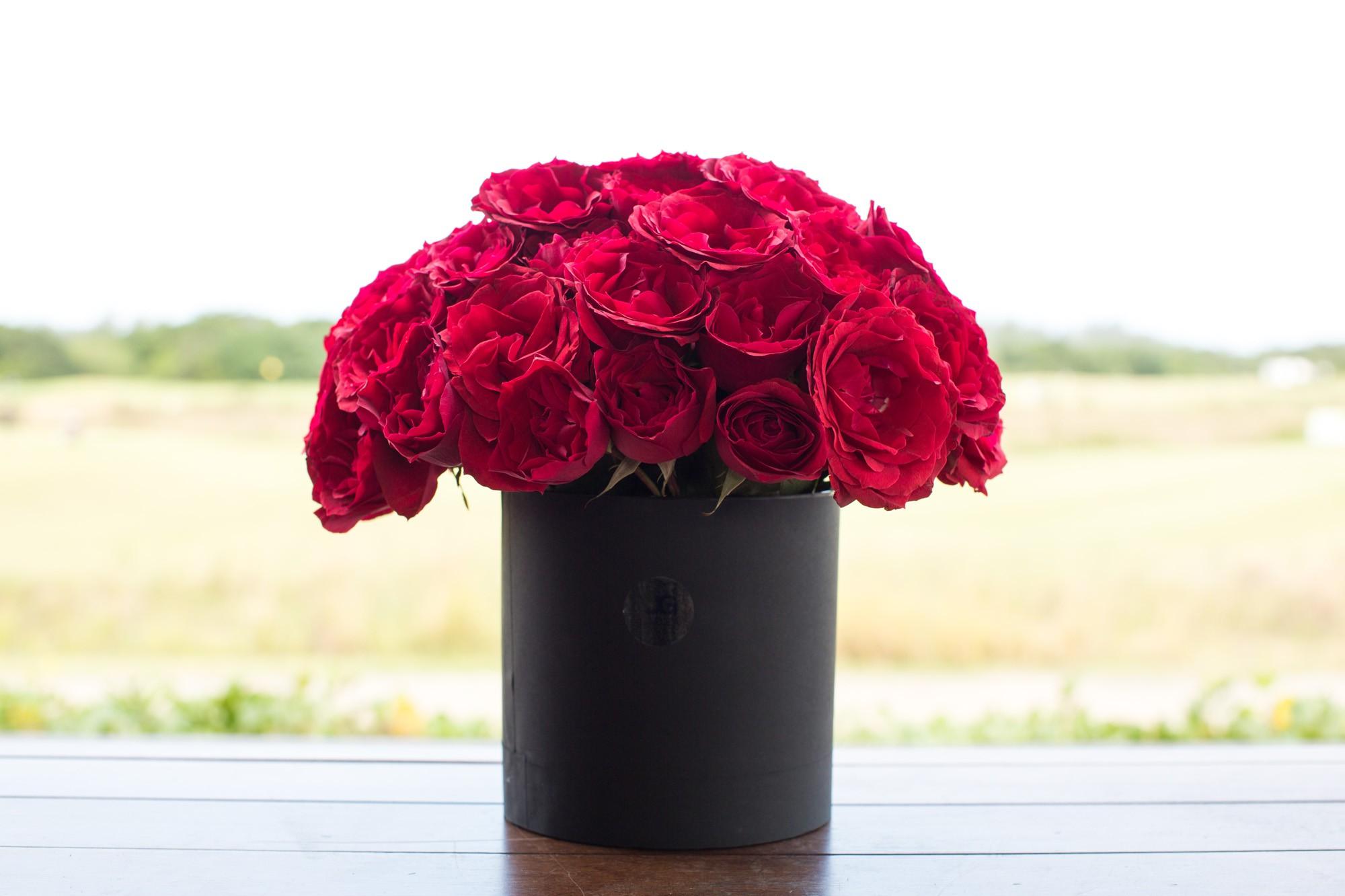 Rosas Vermelhas Premium