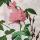 Florido Rosa