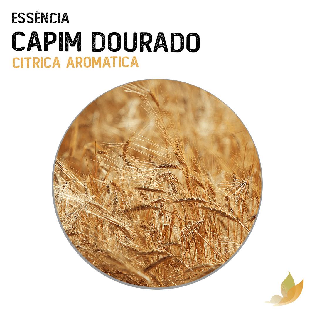 ESSENCIA CAPIM DOURADO