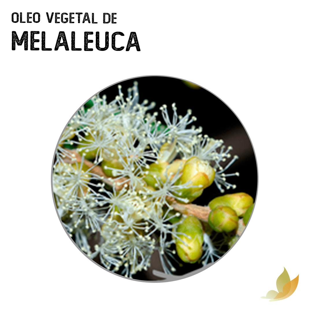 OLEO VEGETAL DE MELALEUCA