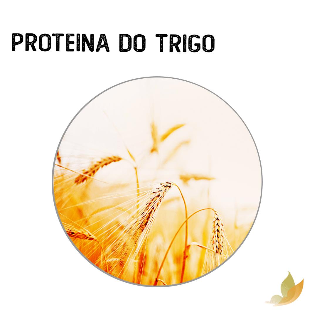 PROTEINA DO TRIGO 100 ML