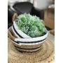 Cesto em palha Seagrass 21 X 14 cms det preto e branco