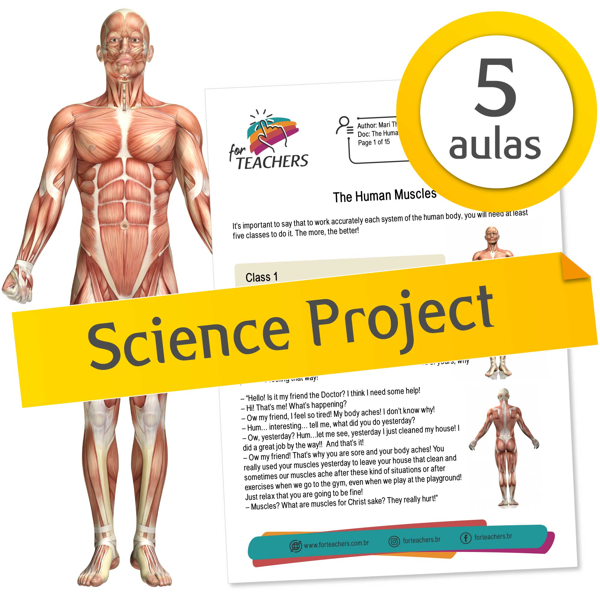 The Human Muscles