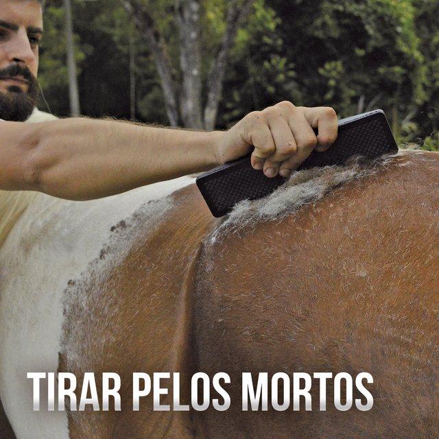 Kit Raspadeira para Cavalos AM Ferramentas Multiuso